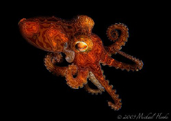 Octopus electronica :-) by Michael Henke