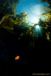 Garibaldi coming out of the darkness. by Scott Gietler