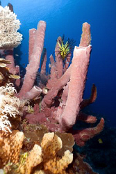Sponges on the reef of Kakaban island by Erika Antoniazzo