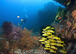 a reefscene in N Male atoll by Geoff Spiby