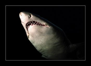 This shark was swimming towards me very slowly, apparentl... by Johannes Felten