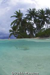 black tip on the beach,maldives nikon d2x 10,5 mm,no strobes by Puddu Massimo