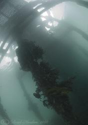 Under the pier. Trefor. North Wales. D200, 10.5mm. by Derek Haslam