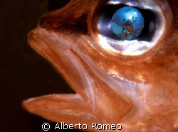 FISHEYE SELFPORTRAIT REFLECTION IN THE EYE OF A RED FISH ... by Alberto Romeo