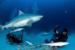 Bull Shark inspecting UW videographer Playa del Carmen Me... by Javier Sandoval