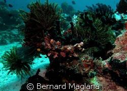 Midway, Samal Island, Davao City... by Bernard Maglana
