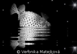 Fish with the stars. by Veronika Matějková
