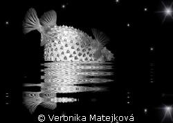 Fish with the stars. by Veronika Matějková