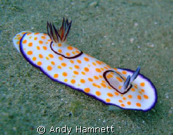 I just love these creatures by Andy Hamnett