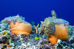 orange by nikon d2x 12-24mm by Puddu Massimo