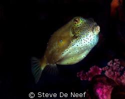 taken on a dive at the ducomi pier. by Steve De Neef