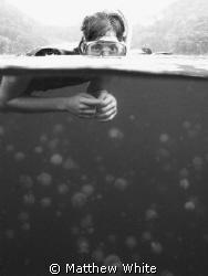 Jellyfish Lake, Palau. by Matthew White