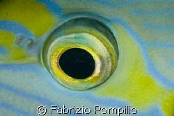 big eye - night dive  canon 400d  s&s  -  60 macro canon by Fabrizio Pompilio