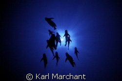 The original image I used for the 'Fish Eye Lens' idea...... by Karl Marchant
