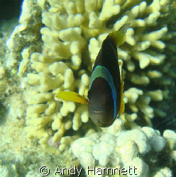 Grrrrr! 