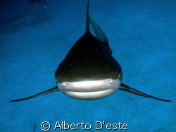 Shark & me... by Alberto D'este