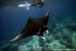 Snorkeler with Manta. by Caroline Istas