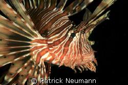Lionfish Portrait taken with Canon 400D/Hugyfot by Patrick Neumann