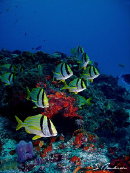 This image was taken during a dive in Cozumel in 2006. by Steven Anderson