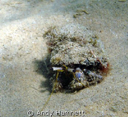 Hermit crab just casually walking towards me. by Andy Hamnett