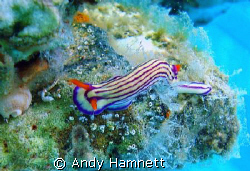Nudi on a support of the pier. by Andy Hamnett