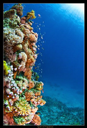 Reef scene of the house reef at the Grand Rotana Hotel in... by Kay Burn Lim