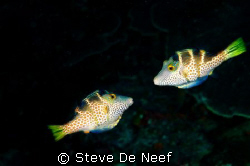 Two tobys looking for each others company. by Steve De Neef