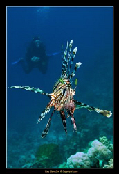 Gary and the Lionfish.... by Kay Burn Lim