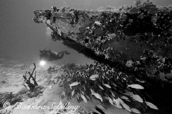 Diver exploring a school of fish behind an airplane wreck by Barbara Schilling