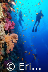 Divers on the wall at Shark Reef. Ras Mohamed Park by Erich Reboucas