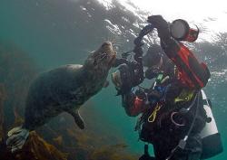 Grey seal posing for Mr H. Farne Islands, Oct 08. 10.5mm. by Mark Thomas