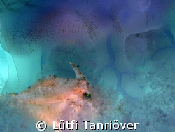 Hello... A shot from Thailand... This small file fish w... by Lütfi Tanrıöver