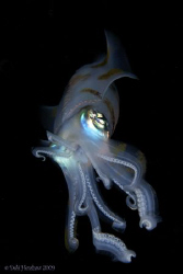 """""""Alien"""" A Night Dive had me a wonderful encounter with th... by Debi Henshaw"""