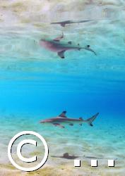 Reflected:Baby shark Nikon D200. 10,5mm, nostrobo Alima... by Marchione Giacomo