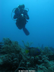 A queen angel passes in front of my buddy, on French reef... by Jean-Louis Courteau