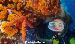 The diver girl is watching a orange fischstar between ora... by Alberto Romeo
