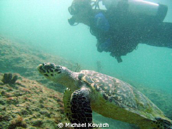 Diver and turtle on the Inside Reef at Lauderdale by the Sea by Michael Kovach