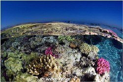 It was the end of a very nice dive in Tiran and everybody... by Andre Yanco