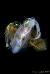 """Mirage"" Night Dive Squid No cropping :o) by Debi Henshaw"