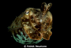 Cuttlefish in Papua .... by Patrick Neumann