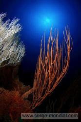 Image taken at Canyon on Pulau Weh / North Sumatra by Serge Abourjeily