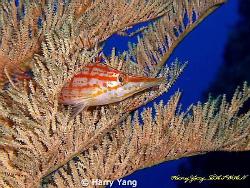 2009/4/19...in Kenting...casio z-1000 by Harry Yang