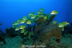 School against the current. by Miguel Cortes