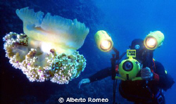 The Jellyfish (Cotyloliza tuberculata) and the Videoghaph... by Alberto Romeo