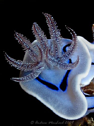 A different angle of a nudi. Can't remember which camera.... by Andrew Macleod