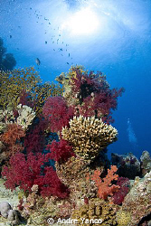 Just another perfect sunny day under water in the color r... by Andre Yanco