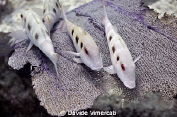 taking a little rest in Jardines, Playa Del Carmen. Nikon... by Davide Vimercati