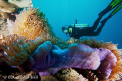 Diver checking Anemone on the bow of the Fujikawa Maru-Ch... by Richard Goluch