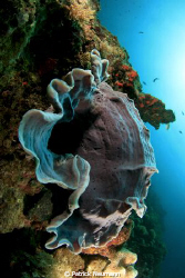 reefscene in Papua yaken with Canon 400D/Hugyfot by Patrick Neumann