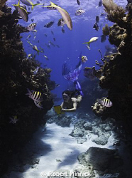 Counting fish for Reef.Org by Robert Minnick